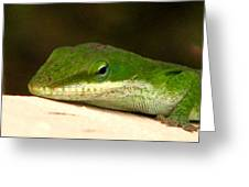 Chameleon 2 Greeting Card