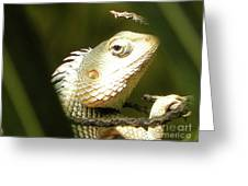 Chameleon Up-close 1 Greeting Card