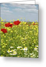 Chamomile And Poppy Flowers Meadow Greeting Card