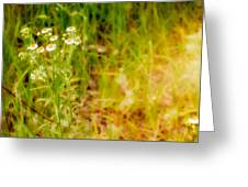 Chamomile In The Sunny Meadow Greeting Card