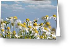 Chamomile Nature Spring Scene Greeting Card