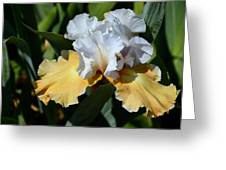 Champagne Iris Greeting Card