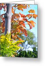 Changing Leaves Greeting Card