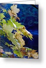 Changing Seasons Greeting Card
