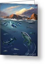 Channel Islands Sharks Greeting Card