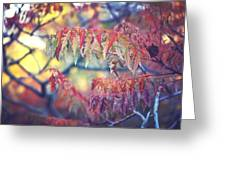 Chaotic Beauty Greeting Card