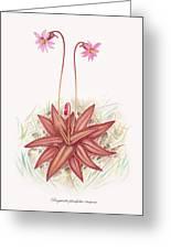 Chapman's Butterwort Greeting Card by Scott Bennett