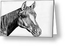 Charcoal Horse Greeting Card