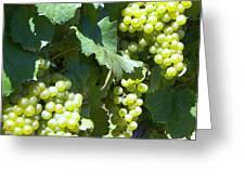 Chardonay Grapes Greeting Card