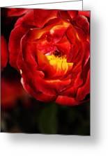 Charisma Rose Greeting Card