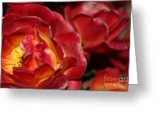Charisma Roses 2 Greeting Card