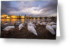 Charles Bridge, Prague With Swans Greeting Card