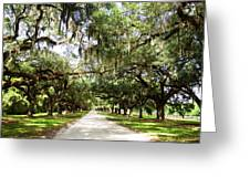 Charleston Oaks 1 Greeting Card