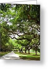 Charleston Oaks 8 Greeting Card