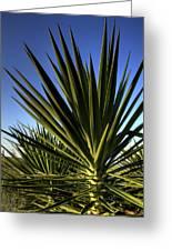 Charleston Yucca Greeting Card