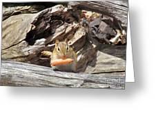 Charming Chipmunk Greeting Card
