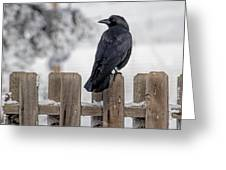 Charming Corvid Greeting Card