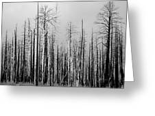 Charred Trees Greeting Card
