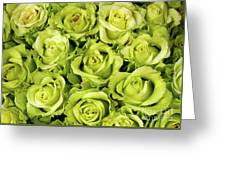 Chartreuse Colored Roses Greeting Card