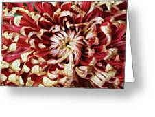 Chase Perfection Greeting Card
