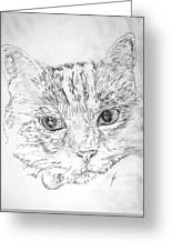 Chat Somnolant Resting Cat Greeting Card