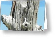Chatham Driftwood Greeting Card