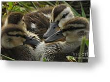 Chatter Greeting Card