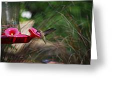 Check Out My Wings Greeting Card