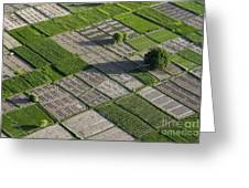 Checker Board Fields Greeting Card