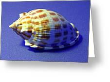 Checkered Helmet Seashell Greeting Card