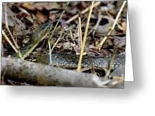 Checkered Keelblack Greeting Card