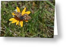 Checkerspot On Bahai Aster 1 Greeting Card