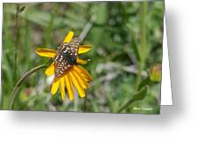 Checkerspot On Bahai Aster 3 Greeting Card