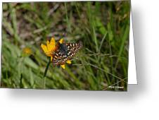 Checkerspot On Bahai Aster 4 Greeting Card