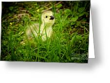 Cheeky Duckling  Greeting Card