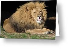 Cheeky Lion Greeting Card
