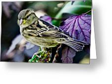 Cheeky Sparrow Greeting Card
