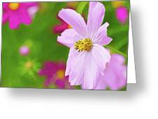 Cheerful Cosmos Greeting Card