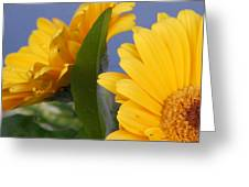 Cheerful Gerbera Daisies Greeting Card
