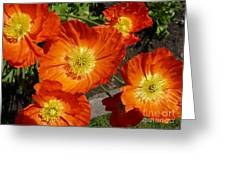 Cheerful Orange Flowers  Greeting Card