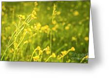 Cheery Buttercups Greeting Card