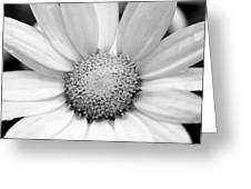 Cheery Daisy - Black And White Greeting Card