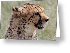 Cheetah No. 2  Greeting Card