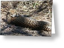 Cheetah Awakened Greeting Card
