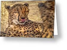 Cheetah Cattitude Greeting Card