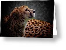 Cheetah Closeup Portrait Greeting Card