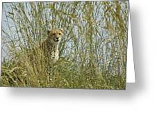 Cheetah Cub In Grass Greeting Card