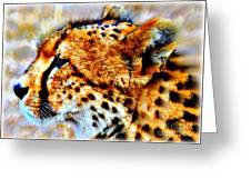 Cheetah IIi Greeting Card