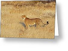 Cheetah In Landscape Greeting Card