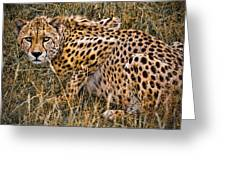 Cheetah In The Grass Greeting Card